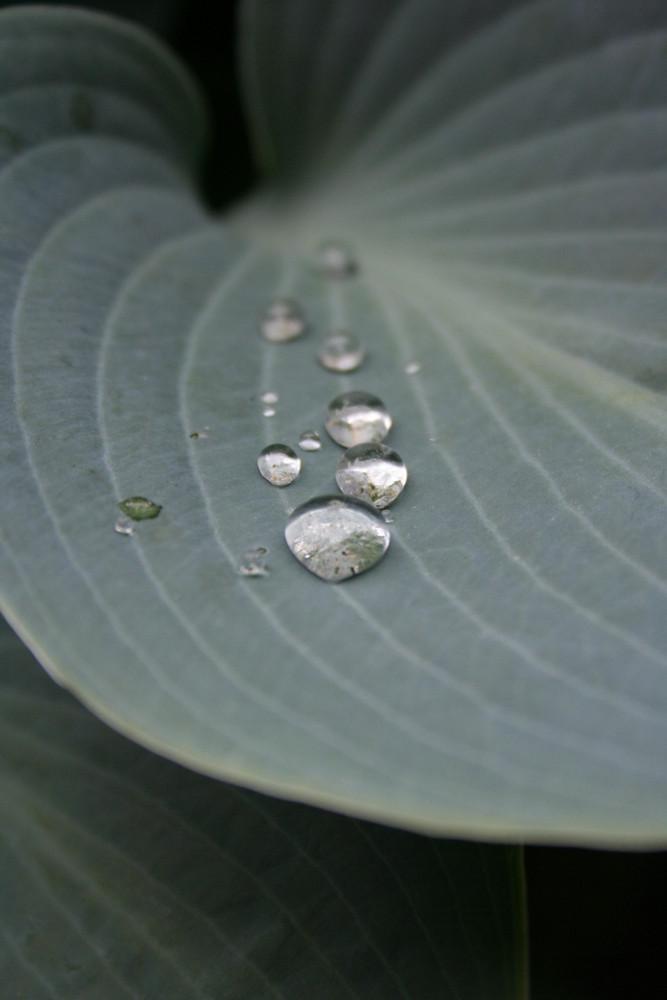 Pflanze mit Abperleffekt