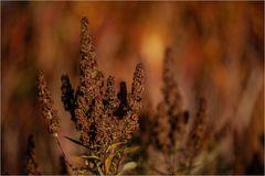 Pflanze_5825