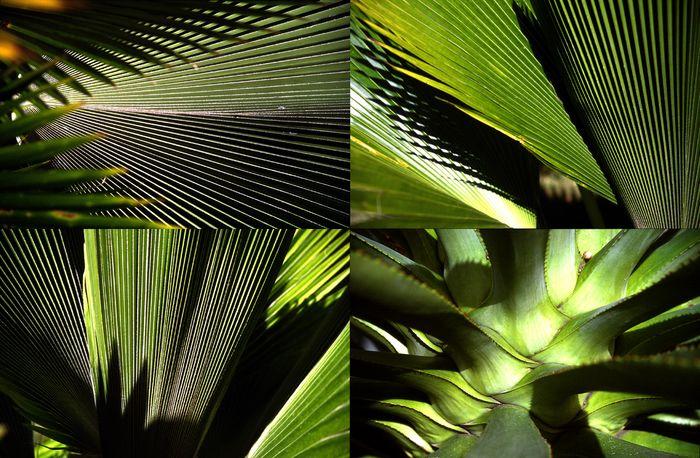 Pflanzen-Architektur