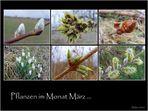 Pflanzen im Monat März ...