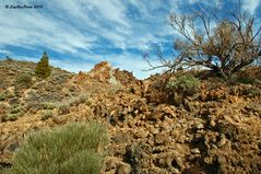 Pflanzen im Nationalpark Teide