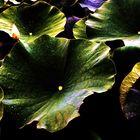 ....Pflanzen im Wasser