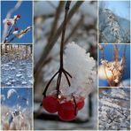 pflanzen im winterkleid