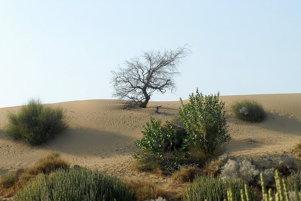 Pflanzen In Der Wüste