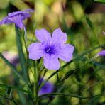 Pflanzen in meinem Garten / Teich ......kleine Serie 2