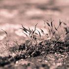 Pflanzen Monochrom 7
