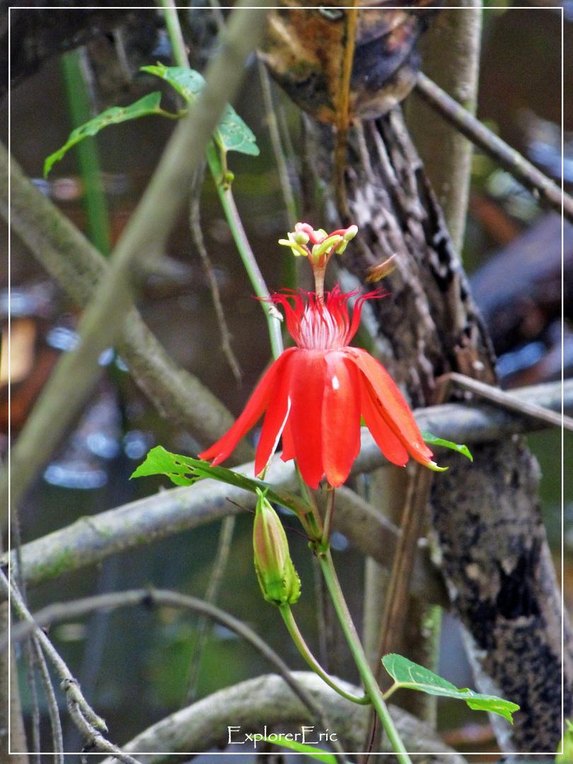 Pflanzen und Blüten der Dschungels.............