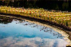 Pflanzenfilter im Wöhrder See