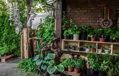 Pflanzenflohmarkt