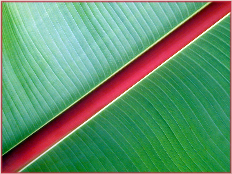 Pflanzengeometrie