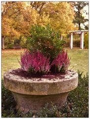 Pflanzenkübel im Park