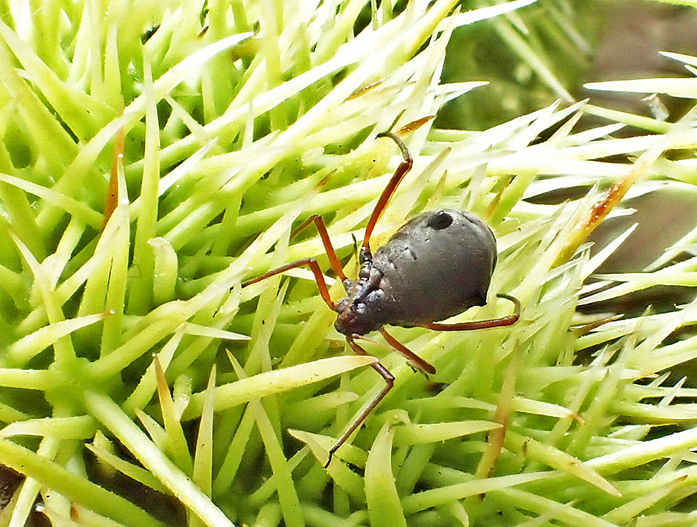 pflanzenlaus foto bild natur insekten l use bilder. Black Bedroom Furniture Sets. Home Design Ideas