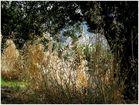 Pflanzenvielfalt im Olivenhain...