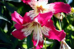 Pflanzenwelt Madeira II