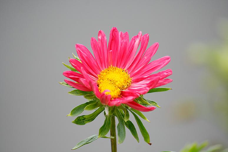 Pflanzenwelt Madeira III