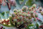 Pflanzenwelt Madeira VI