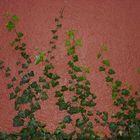 Pflanzenwuchs