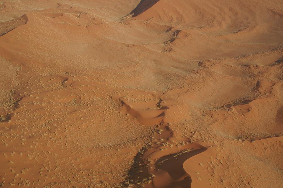 Pflanzenwuchs in der Wüste