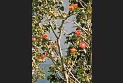 Pflaumenblüten an der Plattenwand eines Hochhauses