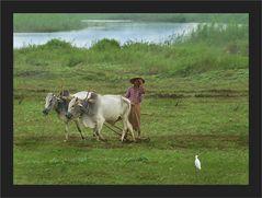 Pflügen am Irrawaddy