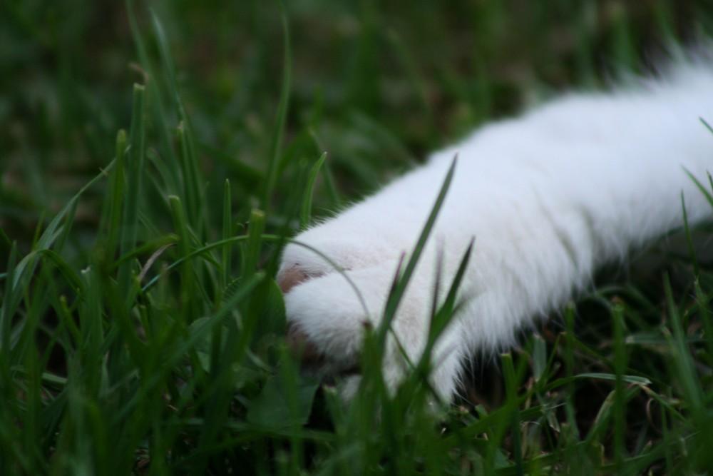 Pfote im Gras