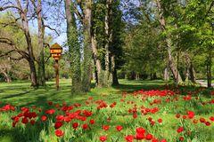 Pfühlpark im Frühling
