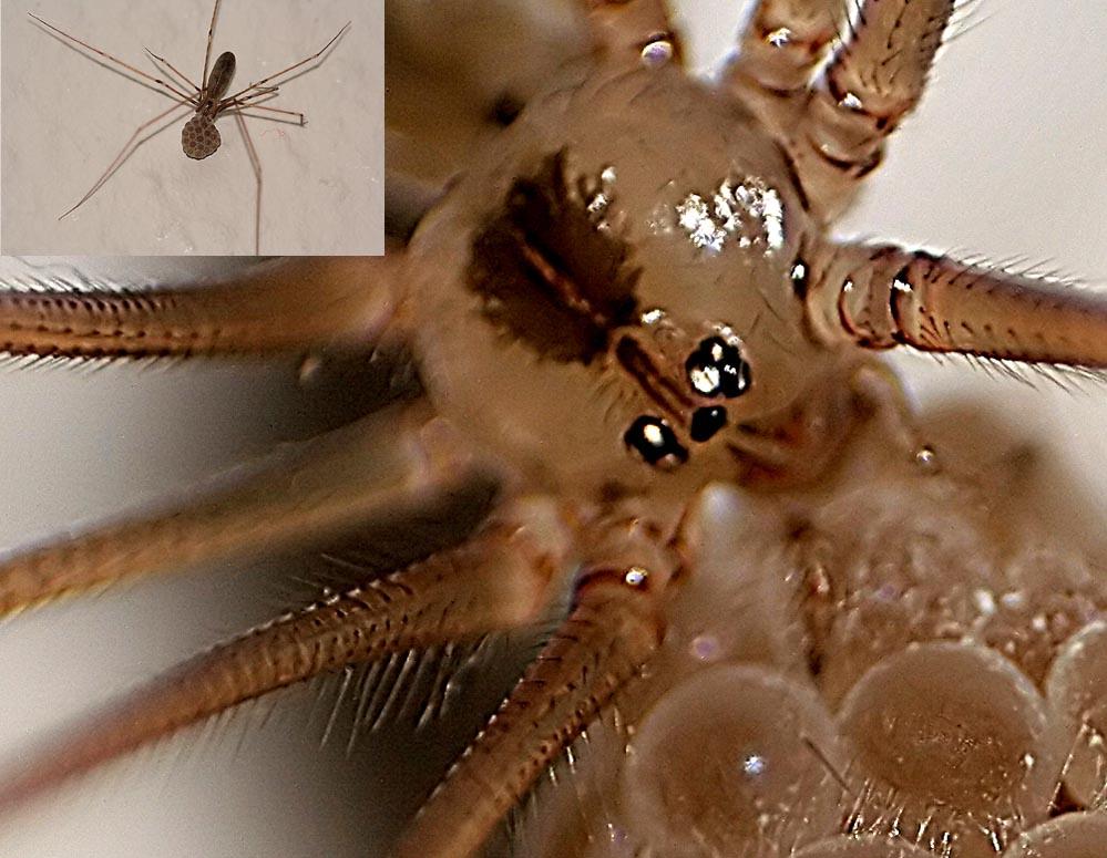 pfui spinne was passiert wenn man das 18 55 umdreht foto bild tiere wildlife spinnen. Black Bedroom Furniture Sets. Home Design Ideas