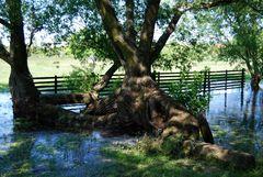 Phantasie - Baum
