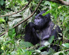 Philosoph im Bwindi National Park