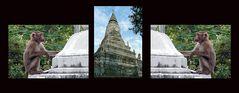 Phnom Penh - Silberpagode - auch der Wohnort der wild lebenden Affen