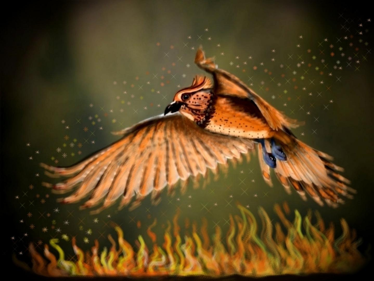 Phönix - Feuervogel