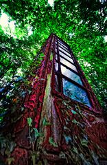 Phone in the Forest