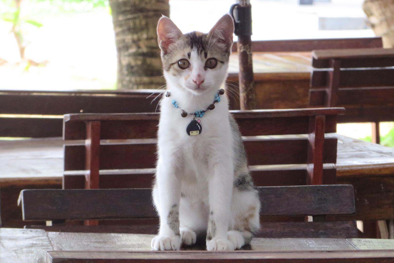 Phuket Cat