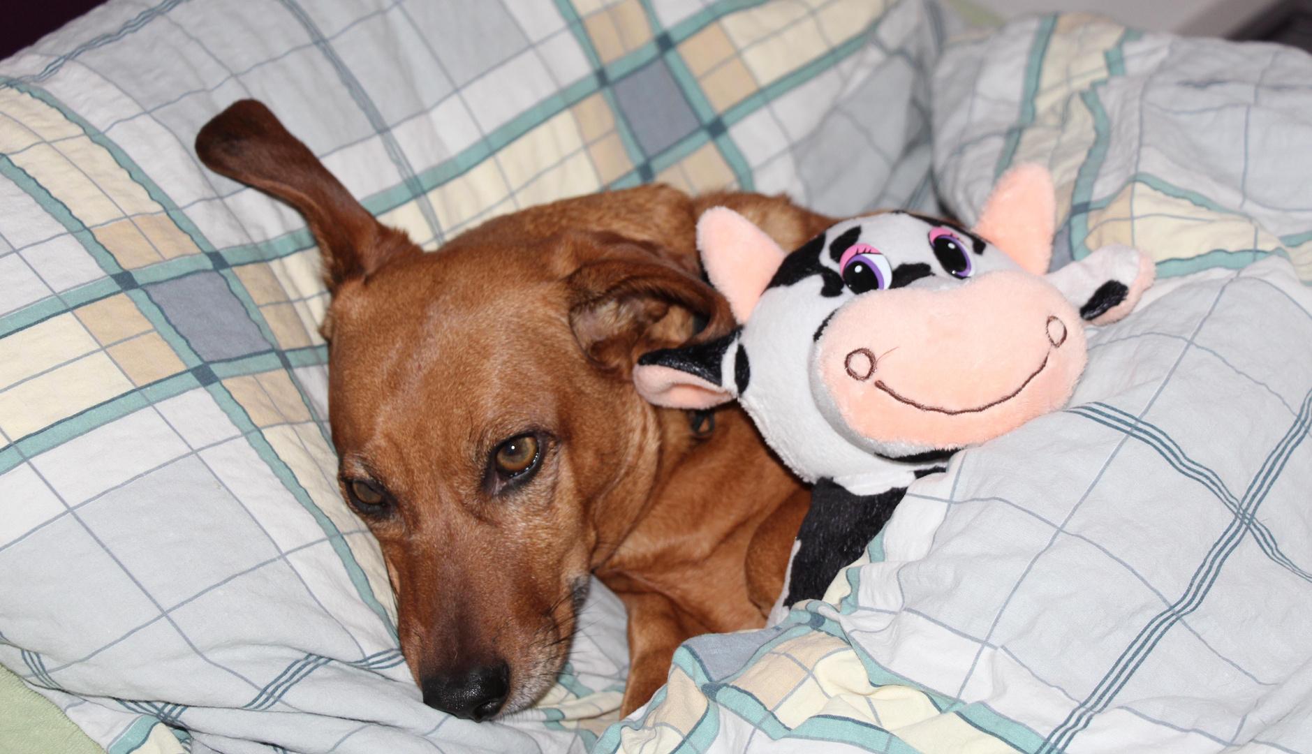 Pia im Bett