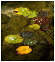 ..piante acquatiche..