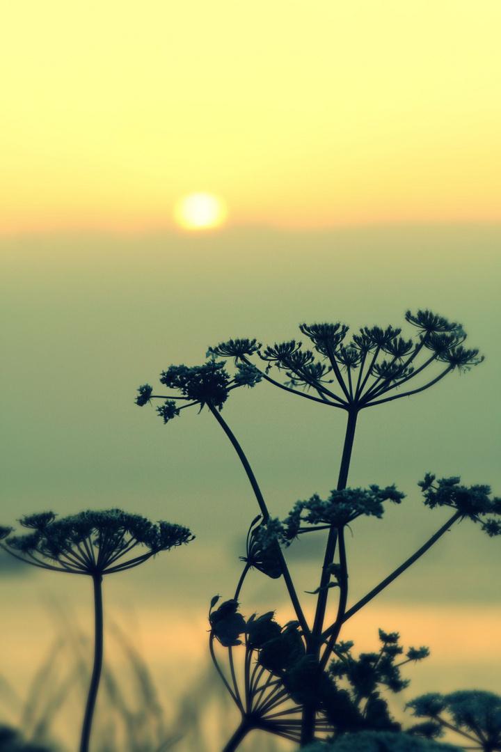 Piante al tramonto