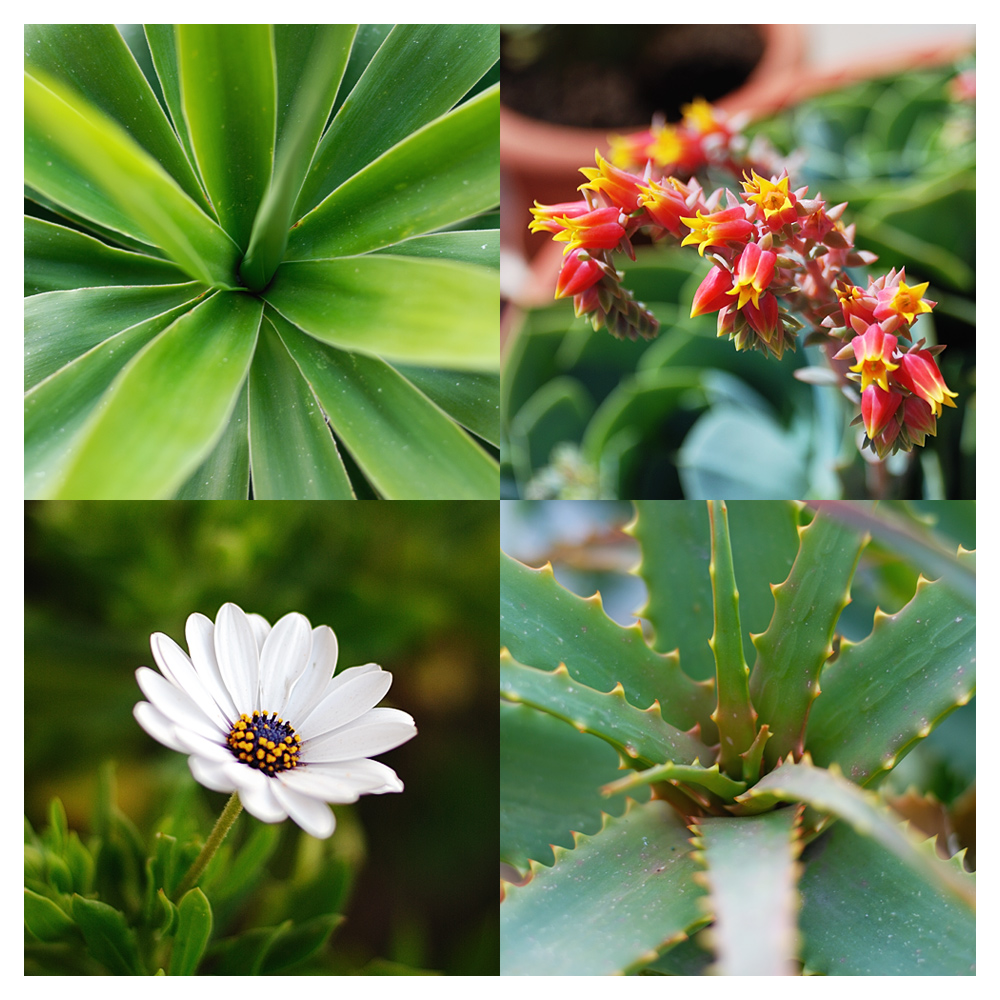 piante_e_fiori