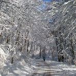 Pic-vert sous la neige . . .