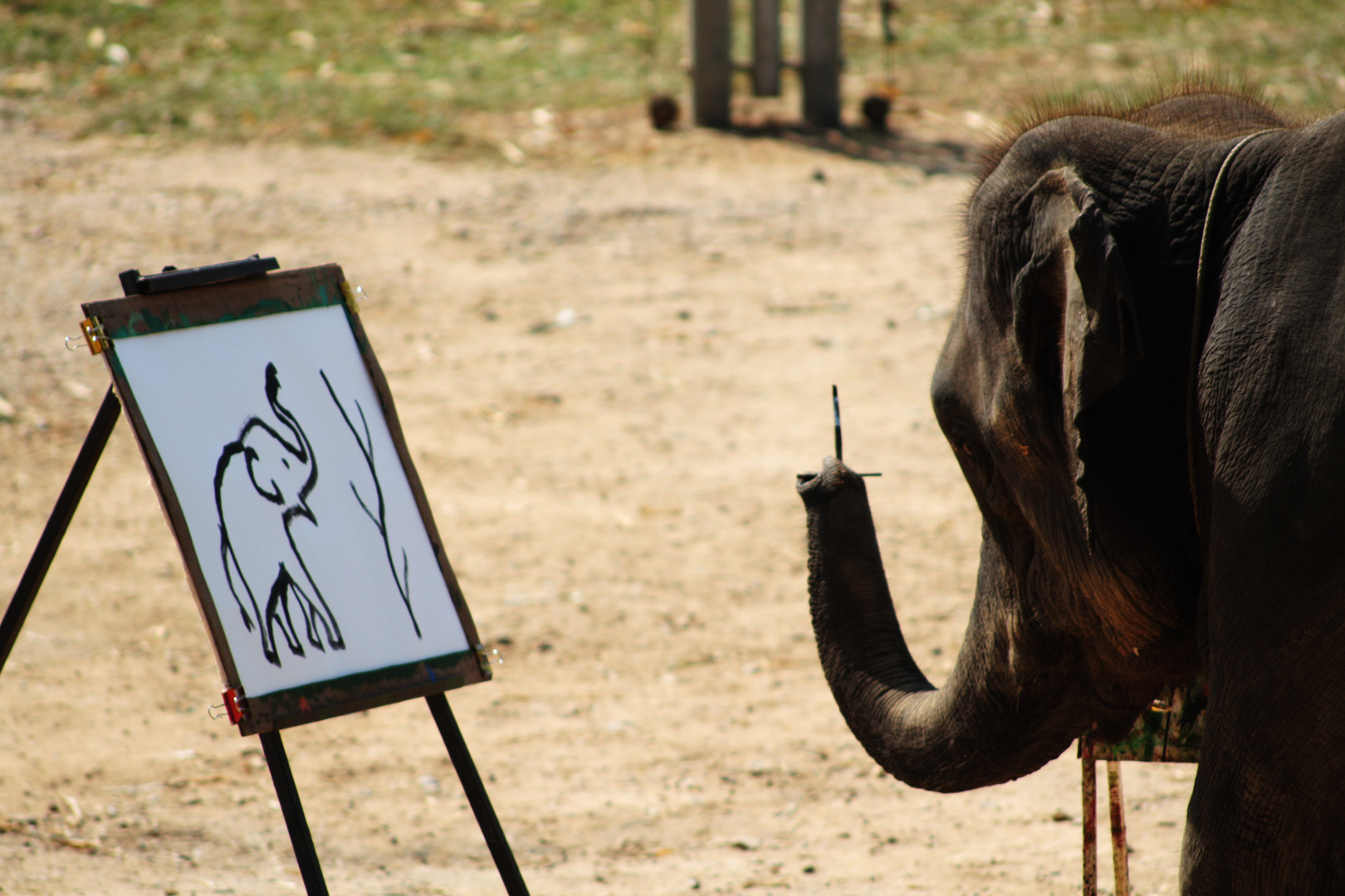 Picasso reincarnated as an elephant???