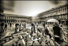 piccioni a San Marco