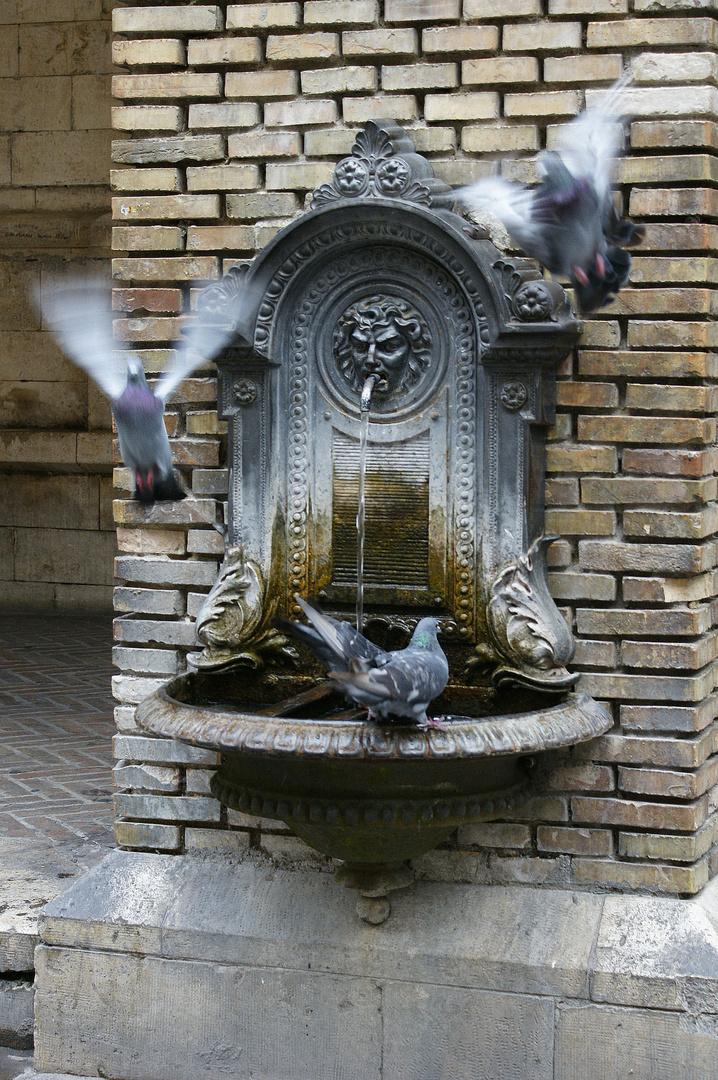 piccioni alla fontana