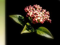 Piccolissimo bouquet