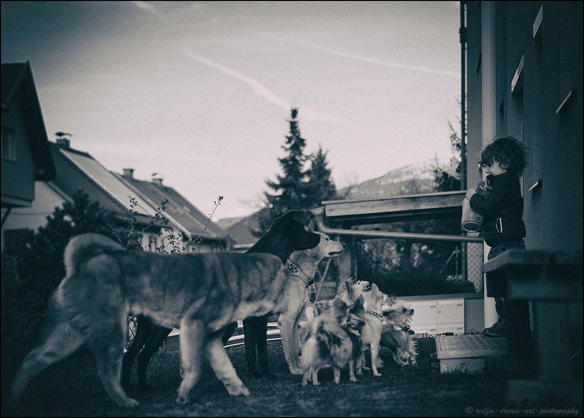 piccolo addestratore di cani :-)