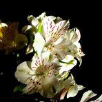 Piccolo fiore.