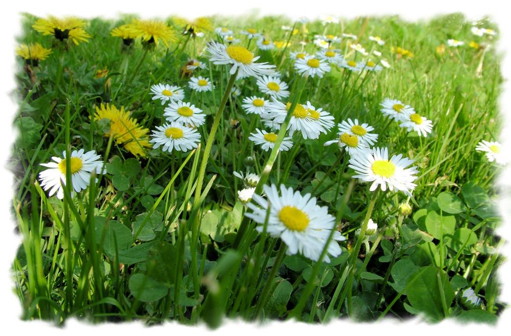 Piccolo inizio di primavera