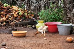 pick pick mit coconut