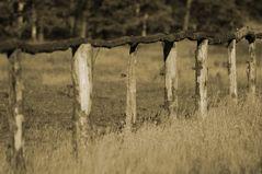 Picket Fences...