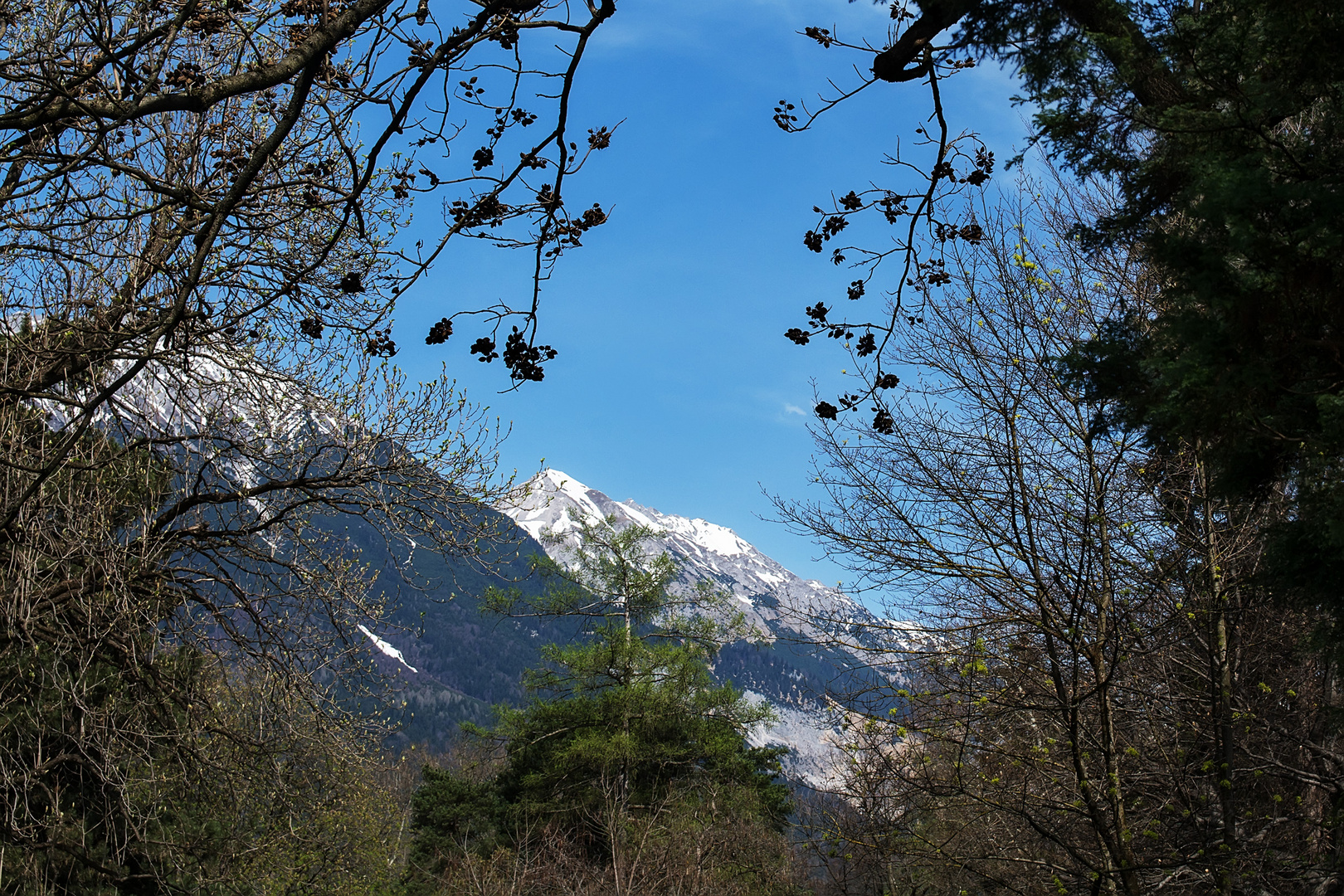Pico nevado