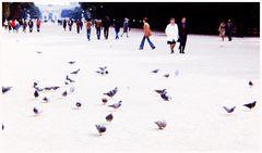 pidgeons de Paris