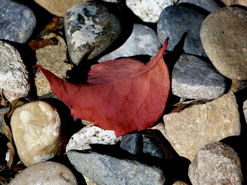 piedras y otoño